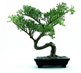 Bonsai di plastica verde Foto Gratuite