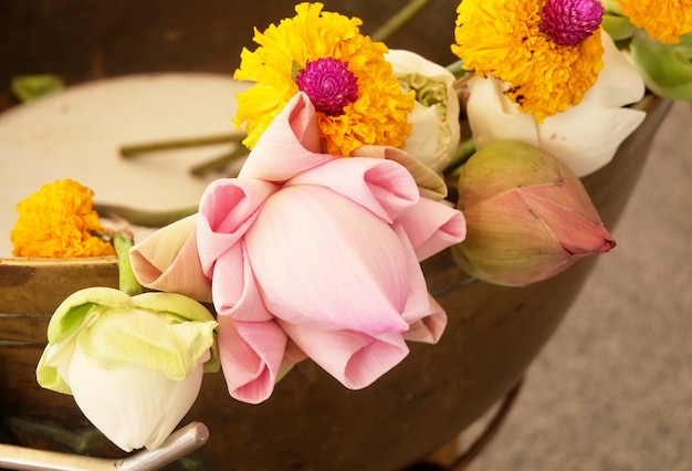 Buddista mettere fiori di loto e calendula a buddha Foto Premium