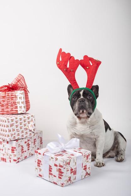 Bulldog francese con corna di renna seduto con scatole regalo di natale Foto Premium