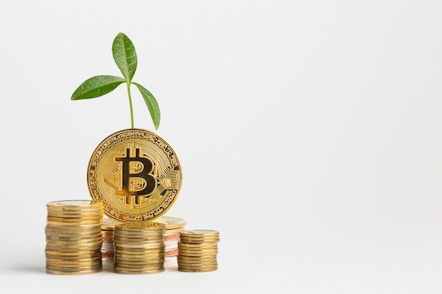 Bundle di bitcoin con pianta Foto Gratuite