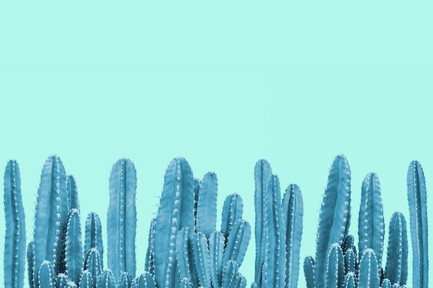 Cactus blu su sfondo turchese Foto Premium
