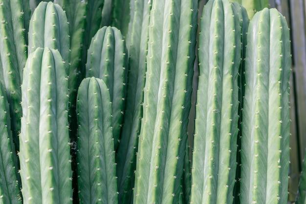 Cactus closeup Foto Gratuite