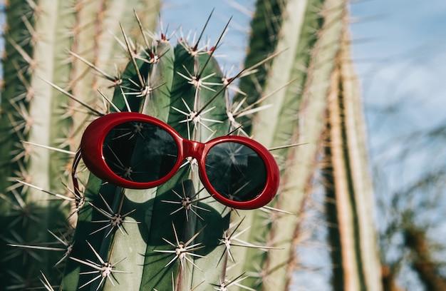 Cactus in occhiali da sole su uno sfondo chiaro Foto Premium