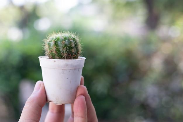 Cactus in vaso Foto Gratuite