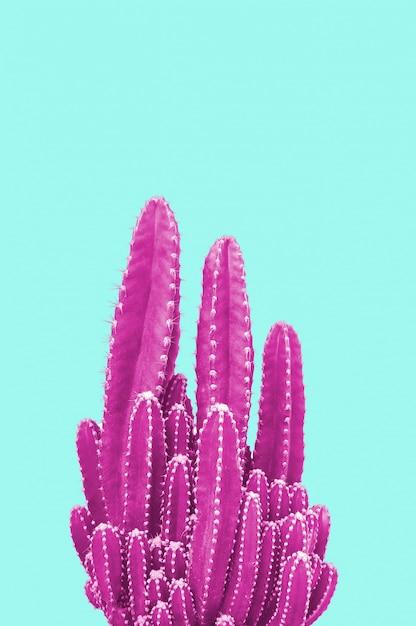 Cactus rosa su sfondo turchese Foto Premium
