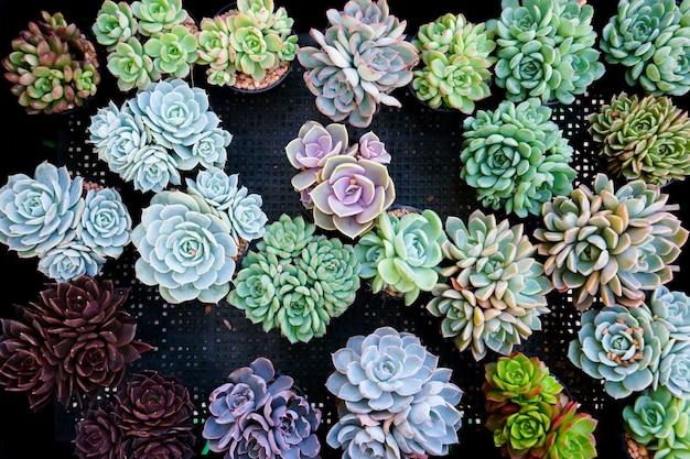 Cactus succulente in miniatura Foto Premium
