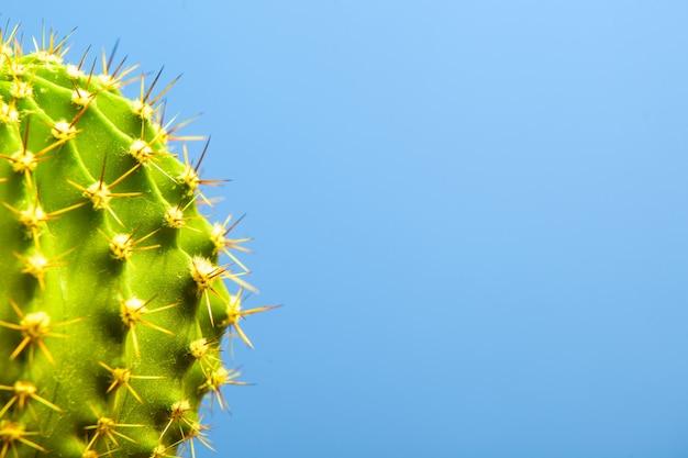 Cactus sul primo piano blu Foto Premium