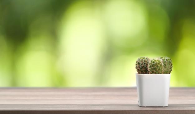 Cactus sulla scrivania in legno Foto Premium