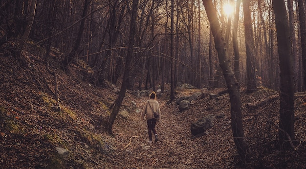 Camminata femminile sola nella foresta con gli alberi nudi durante il tramonto Foto Gratuite