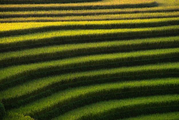 Campi di riso astratti su terrazzati di mu cang chai vietnam Foto Premium
