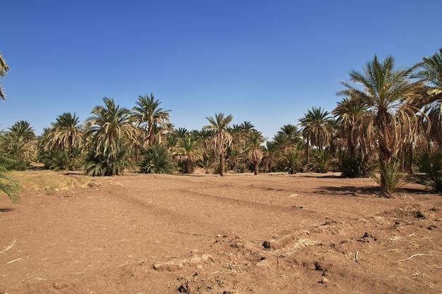 Campi nel piccolo villaggio sul fiume nilo, in sudan Foto Premium