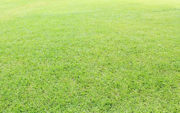 Campo d'erba Foto Premium