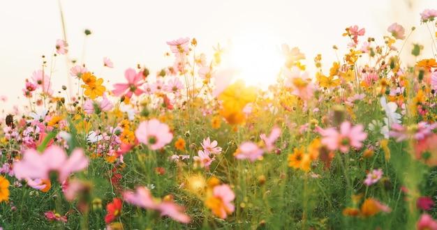 Campo di fiori bellissimo universo Foto Premium