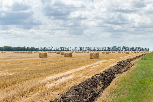 Campo di grano di segale di grano raccolto di cereali, orzo, con balle di fieno pagliaio picchetti forma rettangolare cubica Foto Premium