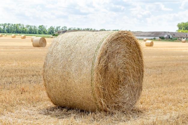 Campo di grano di segale di orzo da grano raccolto, con balle di paglia pagliai a paletti di forma rotonda Foto Premium