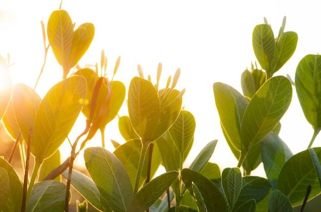 Campo di illuminazione e sole nel tempo di sera, giardino di alberi Foto Premium