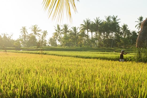 Campo di riso a bali Foto Gratuite