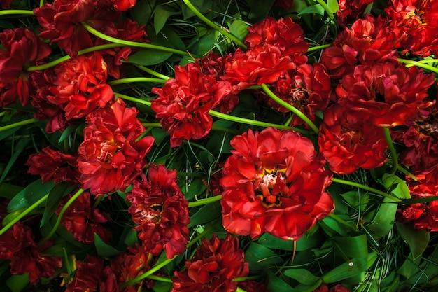 Campo di tulipani nei giardini di keukenhof, lisse, paesi bassi Foto Gratuite