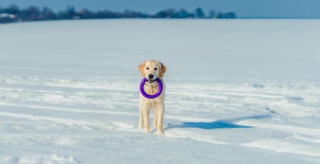 Cane adorabile che gioca fuori Foto Premium