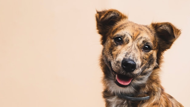 Cane amichevole con la lingua fuori copia-spazio Foto Gratuite