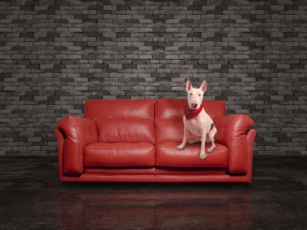 Cane bianco su divano rosso in pelle scaricare foto gratis - Divano pelle rosso ...