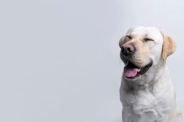 Cane bianco Foto Gratuite