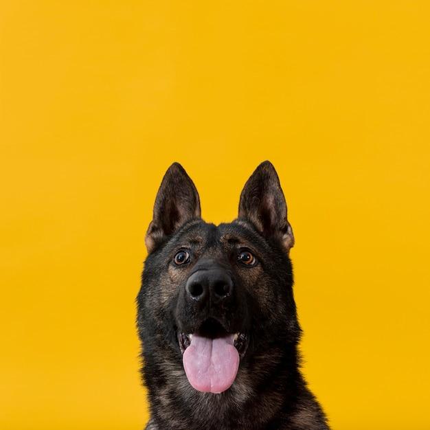 Cane carino con la lingua fuori e copia-spazio Foto Gratuite