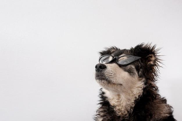 Cane carino con occhiali da sole e copia-spazio Foto Gratuite
