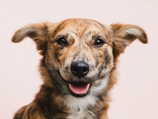 Cane carino guardando dritto alla telecamera Foto Gratuite
