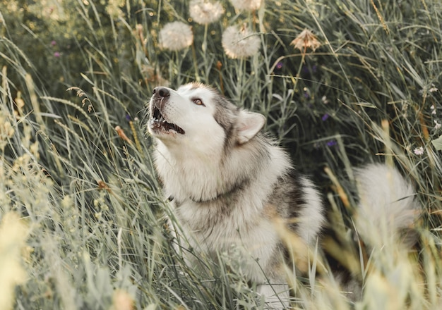 Cane carino in erba alta Foto Premium