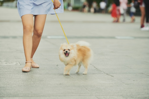 Cane che cammina in città Foto Gratuite