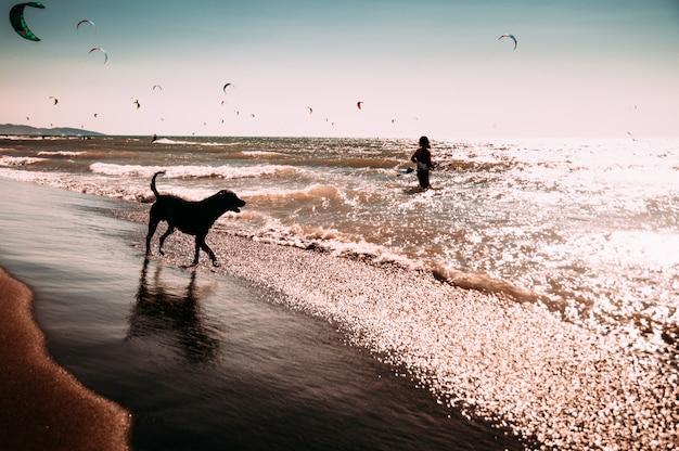 Cane che gode giocando sulla spiaggia Foto Premium