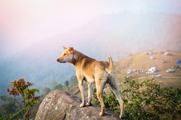 Cane che sta sulla roccia / paesaggio del supporto del cane sulla vista della collina di campeggio sui precedenti della montagna Foto Premium