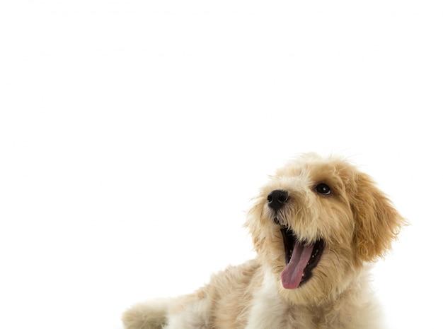 Cane cucciolo isolato su sfondo bianco Foto Gratuite