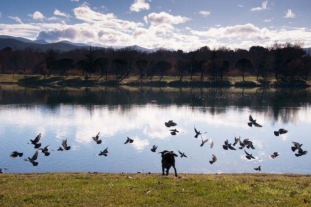 Cane del cane del labrador della francia di orientales della francia Foto Premium