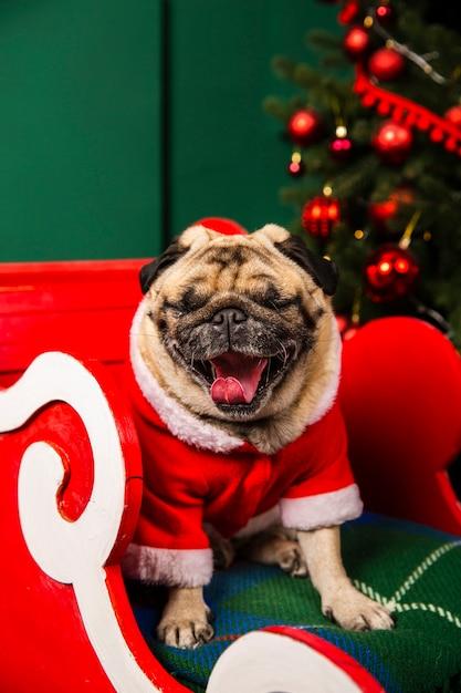 Cane dell'angolo alto santa con la lingua fuori Foto Gratuite