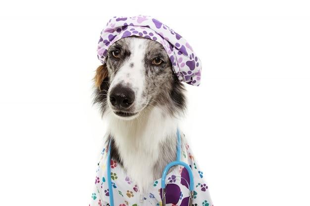 Cane di border collie vestito come stetoscopio veterinario e cappuccio d'uso, abito dell'ospedale con l'espressione seria. Foto Premium