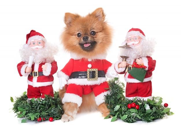 Cane e natale Foto Premium