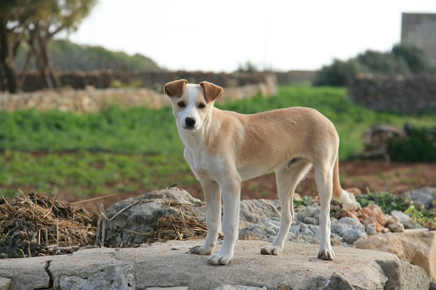Cane in fattoria Foto Gratuite