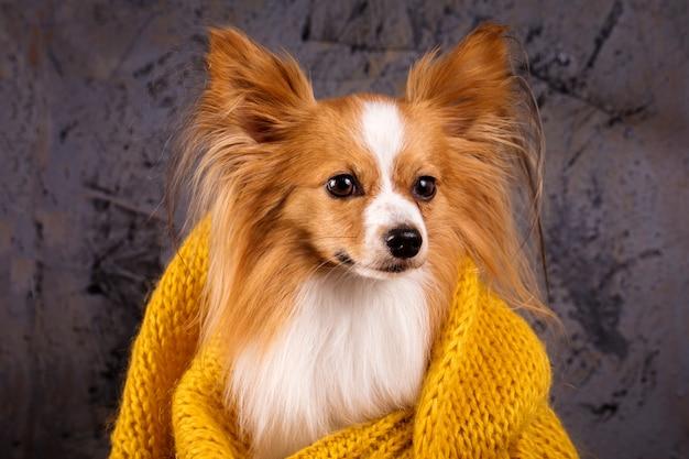 Cane in un maglione accogliente Foto Premium