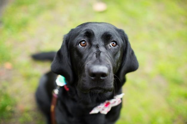 Cane nero in un parco con uno sfondo sfocato Foto Gratuite