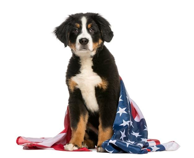 Cane patriottico che si siede con la bandiera americana Foto Premium
