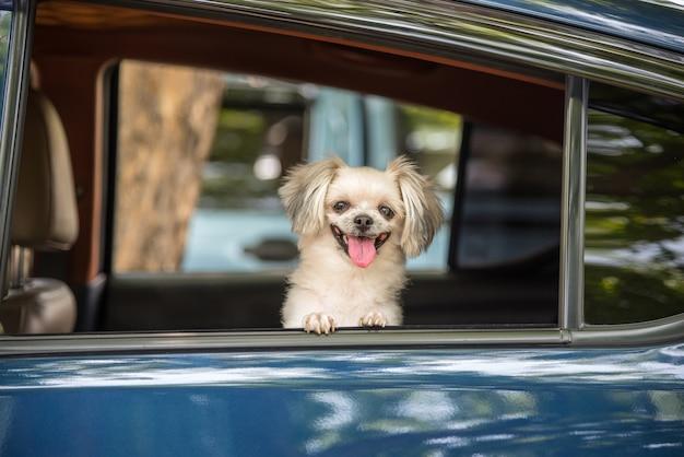Cane razza mista così carina con shih-tzu, pomeranian e poodle seduto sul seggiolino Foto Premium