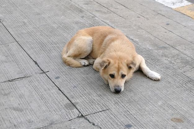 Cane senza casa abbandonato sulla strada Foto Premium
