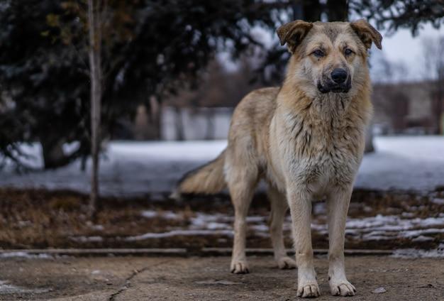 Cane senzatetto per strada Foto Premium
