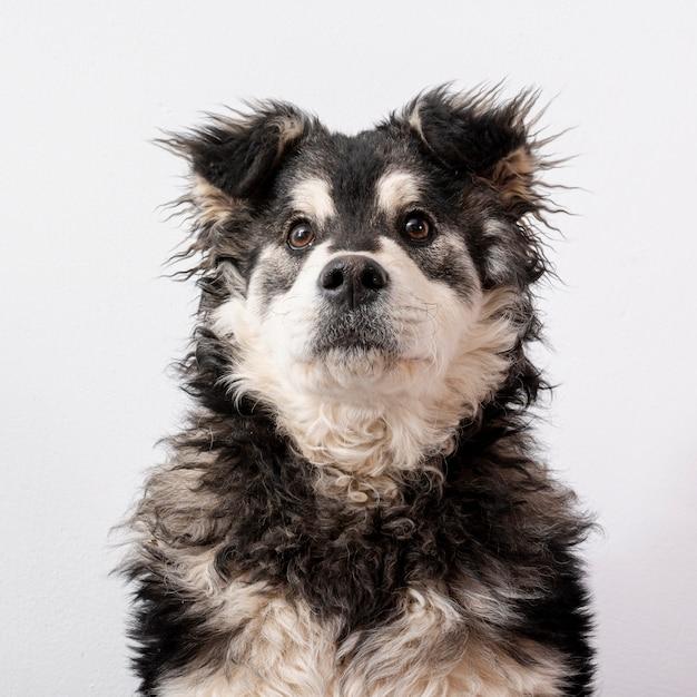 Cane simile a pelliccia di vista frontale su fondo bianco Foto Gratuite