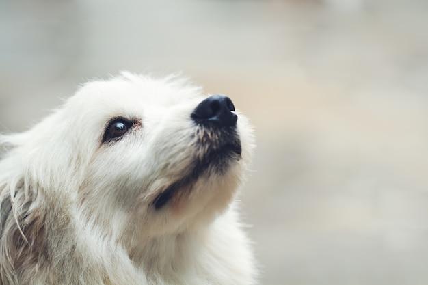 Cane solo solitario Foto Gratuite