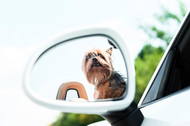 Cane su un primo piano di viaggio stradale Foto Gratuite