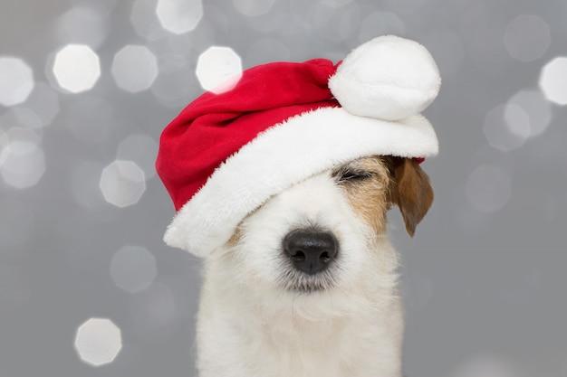 Cane svegli del cane di russell che indossa un cappello rosso di natale. Foto Premium