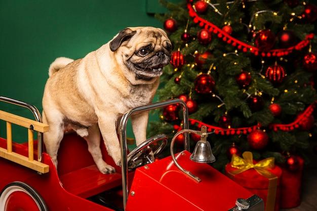 Cane sveglio dell'angolo alto in slitta della santa Foto Gratuite